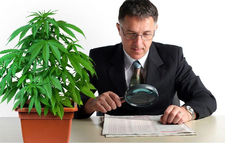 Marijuana Stocks: Avoid Getting Baked